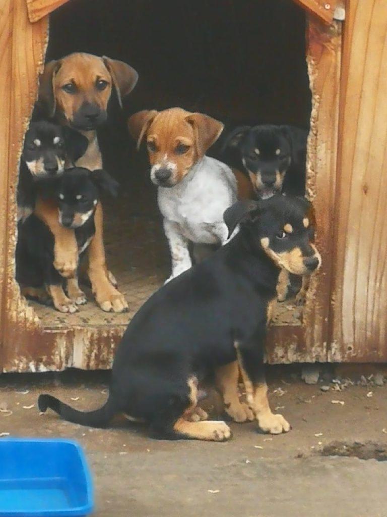 4Paws Animal Shelter